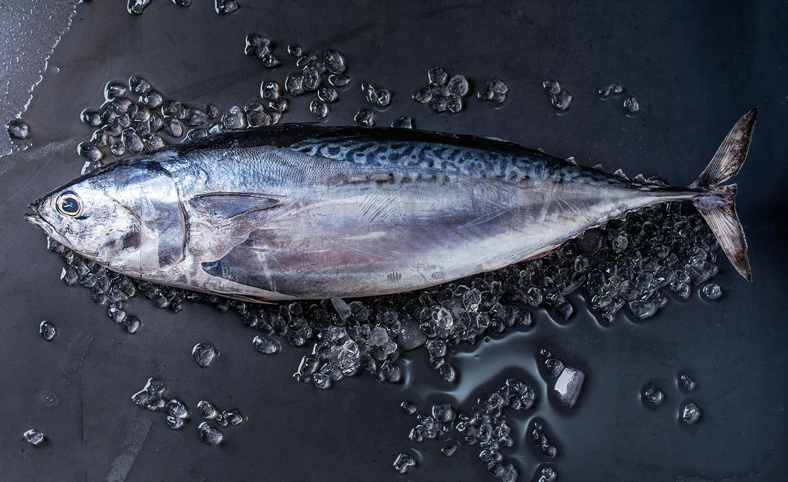WHOLE TUNA Image